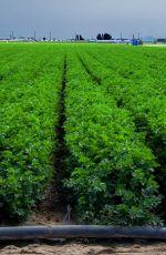 何謂綠色成長行動聯盟(G2A2)?