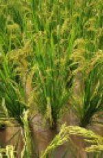 友善耕作對於台灣農業產銷體制轉型的意義